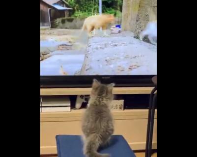 【真似】テレビの真似をしてジャンプ!子猫ちゃんが可愛すぎる