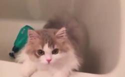 """【ニャー】水嫌いな猫ちゃん、これから """"洗われる"""" ことを悟ってしまう・・・"""