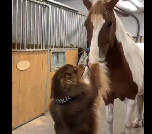 """【癒やし】仲良しな犬と馬による """"ラブラブシーン"""" が微笑ましいと話題に!"""