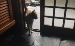 """【台風】近所の野良猫が """"雨宿り"""" をしにきたぞ。玄関が足跡だらけになった!"""