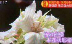 【即位の礼】また奇跡が起こる! 静岡浅間神社で桜が咲く!
