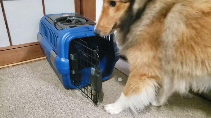 【新説】猫は液体だが、犬も液体だったのか この犬を見よ!