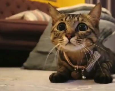 """【興味津々】今にも飛びつきそうな猫。この""""瞬間"""" がたまらない!"""