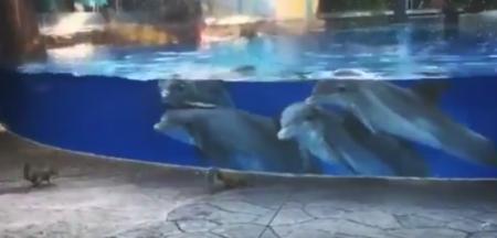 【好奇心】水族館にいるイルカくん達、人間のこどもに全然負けてない!笑
