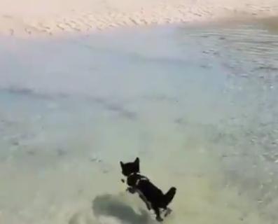 """【犬掻き】飼い主についていくために""""意を決して泳ぐ"""" 猫が可愛すぎる!"""