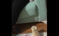 """【癒やし】頑張って飼い主の元に """"ジャンプ"""" する子猫ちゃんが可愛すぎる!"""