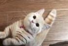 【子猫】猫と飼い主による「握手会」が開催される。指一本で十分よ!