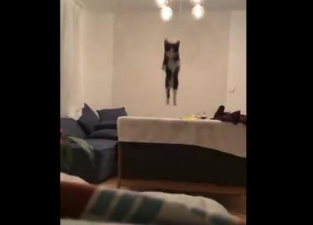 【ジャンプ】完全に「跳躍」を極めた猫ちゃんが可愛い。迫力満点の映像!