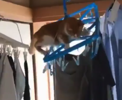 【高所】猫ちゃんよ、、どうしてそうなったんだ!高いところが好きとは言え・・・