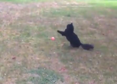 【癒やし】運動神経がマジで「ゼロ」な猫ちゃんが可愛い。一体どうした!