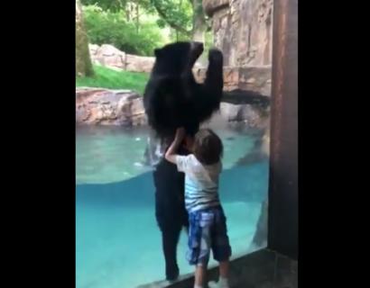 【子供】めちゃくちゃノリが良いクマが話題に。動物園行きたくなる〜!