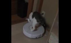 """【天才】飼い主を起こすために """"ルンバの起動"""" を覚えた猫ちゃんが可愛い!"""