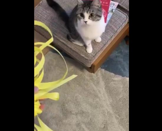 """【わかる】捨てようと思ったゴミに """"必死"""" になるうちの猫が可愛すぎる!"""