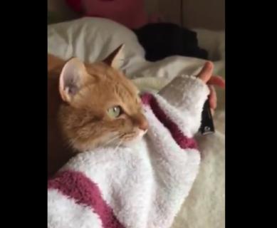 【朝】鳥の鳴き声にニャンニャンと反応を返す猫ちゃんが可愛すぎる!