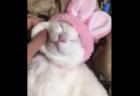 【猫パンチ】体を乾かす「ドライヤー」が嫌いすぎる猫ちゃん、パンチが早すぎる!