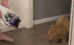 """【そりゃそうだ】人間の行動がバグってると流石の猫でも """"ドン引き"""" するという事実が判明!"""