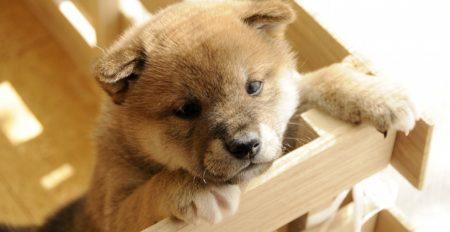 【動画】愛犬の死から鬱状態のお父さんと家族のところに1匹のちび犬がやってきた瞬間・・(涙
