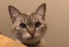 【最高】まるで恋人のようにくっついてくる猫ちゃんがキュートすぎる!