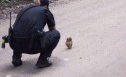 """【チョコン】職務質問を受ける """"フクロウの赤ちゃん"""" が可愛すぎた!"""