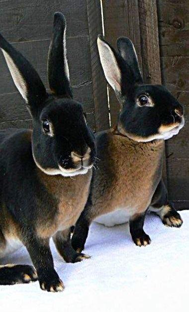 おとぎ話に出て来そうなウサギさんが発見される! これもう半分ファンタジーだろ