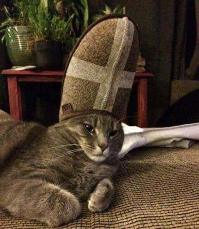 ニャーマ教皇をご覧ください