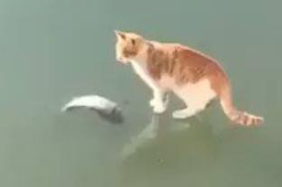 【猫好き必見!】猫が凍った池の中にいる魚を獲ろうとした結果