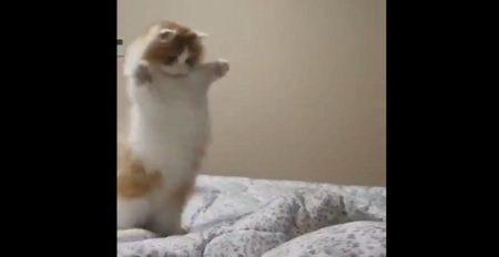 【?!】突然の出来事に背筋ピーーン(o・ω・o)ってなってしまったネコが可愛すぎる