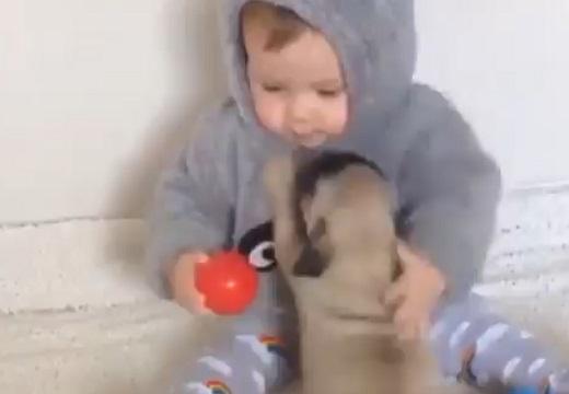 【6秒の癒やし】赤ちゃん×子犬 この可愛さは無敵!「かわいすぎて泣けてくる;;」