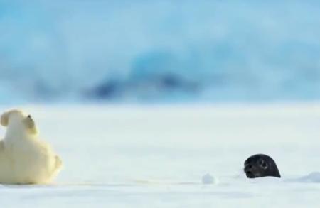 【仰天】突然穴から出てきたアザラシにびっくり!白くまちゃんが可愛いぞ!