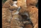 【冬】茶トラ猫の集団が皆でお昼寝。この日向ぼっこは最高に気持ちよさそう!