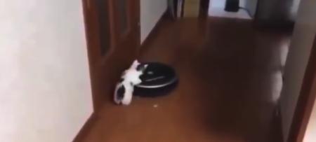 【癒やし】楽しそうな乗り物(ルンバ)を発見してしまった子猫ちゃんが可愛い!