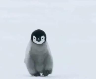 【癒やし】お疲れの皆さん!ペンギンを見て癒やされませんか。最高ですよ!