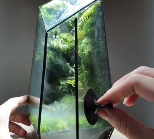 【テラリウム】箱を開けたらそこは「幻想的な森」でした。日常に癒やしを!