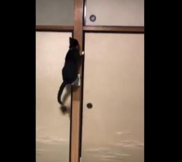 【ボルダリング】実家の猫の「身体能力」が高すぎる。綺麗に登るな〜