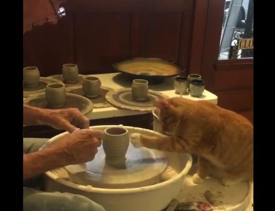 【陶芸】「猫の手を借りる」とはまさにこのことか。完成品が気になるぞ!