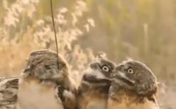 """【唖然】木の枝がついている仲間を発見したときのフクロウの """"顔"""" が傑作すぎる!"""
