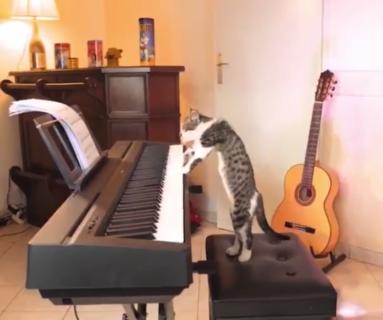 【癒やし】ピアノ演奏をする猫が「只者では無い」と話題に!