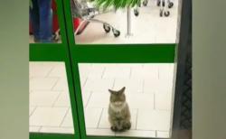 """【癒やし】これが本当の """"招き猫"""" である。お店の入口で大人しく座ってて可愛い!"""