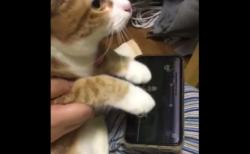 【ノールック】猫が音ゲーをプレイする動画がすごい。可愛すぎるぞ!