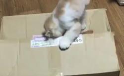 【ミステリー】「それが彼を見た最後の姿だった」ダンボール箱のなかに消える猫ちゃん・・・