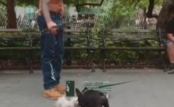 """【天才】犬をもだます """"人形遣い"""" の手さばきが凄すぎる。もはや自分が騙されてた・・・"""