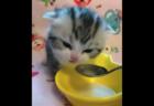 【仲良し】どうしてもカリカリが食べたい犬くんに「一粒だけ」分けてあげる猫ちゃんが可愛い!
