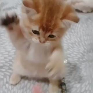 【動画】子猫パンチが可愛すぎる