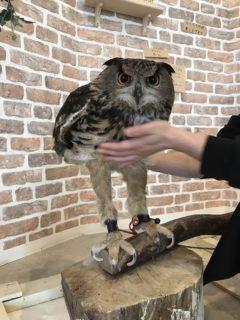 【スリム】フクロウの「足」が驚異的に長すぎる。知らなかった!
