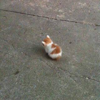 """【野良猫】こんな小さい生物(子猫)が """"道端"""" にいたら引き取るしか無いでしょそりゃ・・・"""