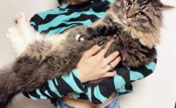 """【ミヌエット】猫における9ヶ月間の """"変貌"""" が凄すぎる。こんなに大きくなるのか!"""