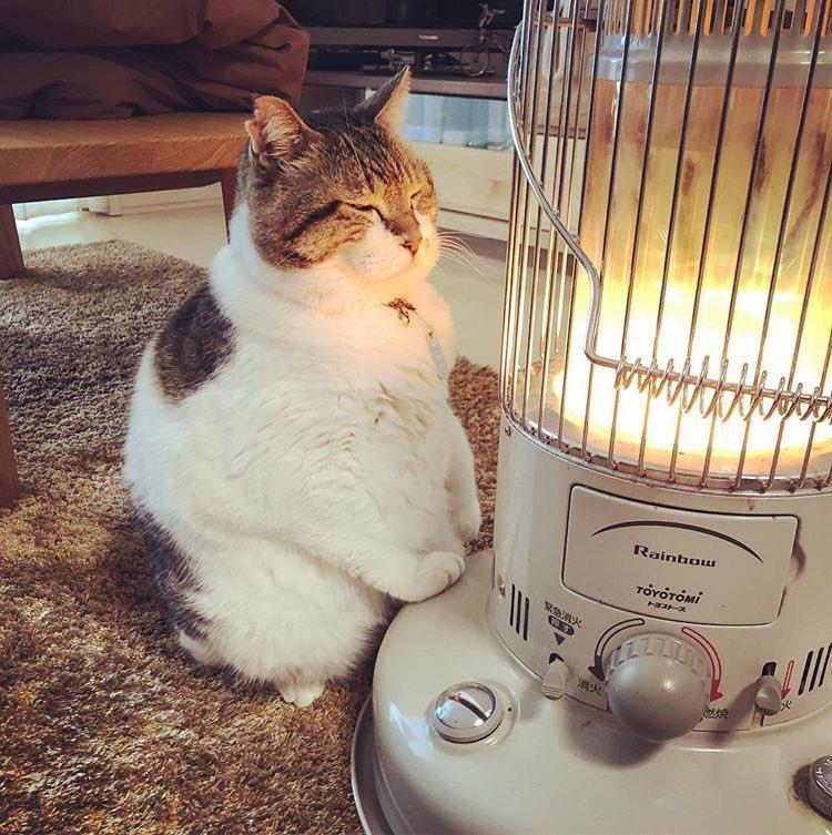 【最高】ストーブの前に座り暖をとる猫の表情がたまらない