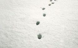 【アート】猫の足跡を見てみるとほとんど直線なんです。もはや芸術的である!