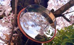 【季節】カーブミラーに映る「日本の四季」を撮影した写真が美しすぎる!