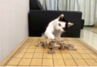【動画】センザンコウという怪獣が怖すぎる! 壁を破壊しまくり!
